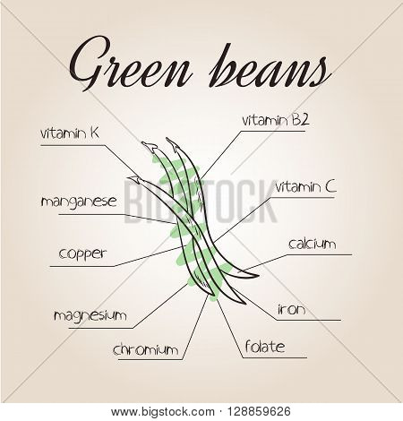vector illustration of nutrients list for green beans.