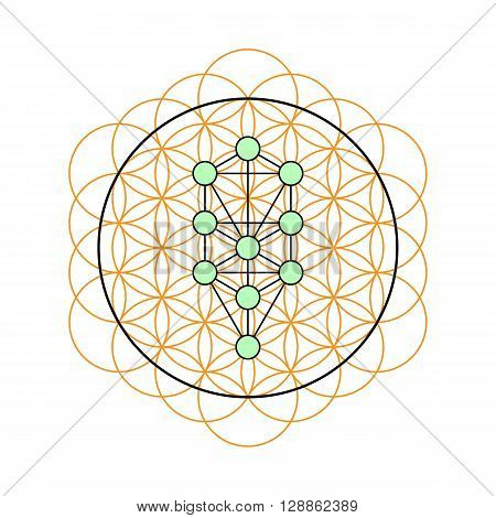 Sacred geometry. Tree of life in a Flower of life. Vector Illustration