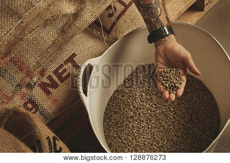 Tattooed Barista Hand Holds Raw Green Coffee Beans From White Plastic Basket, Above Cotton Bags On E