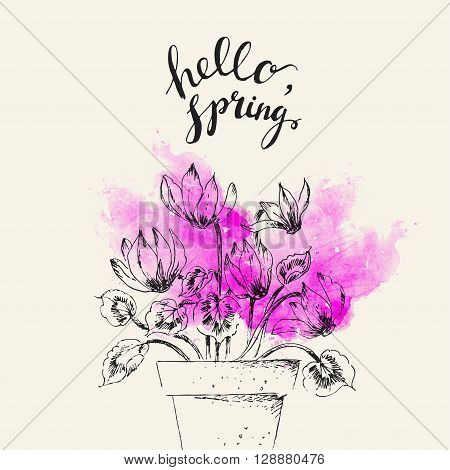 Hand drawn line art pot cyclamen flower and hello spring lettering on bright pink watercolor splash. Spring cyclamen ink drawing for easter decor garden backgrounds floral design.