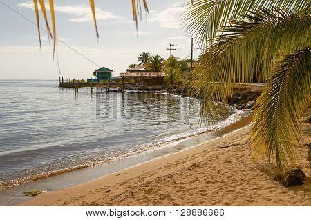 Beach and palms at island of Roatan in Honduras.