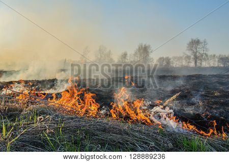 Strong uncontrolled burning of dry grass in spring