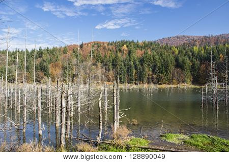 Dead trees in a swamp lake. Cuejdel lake was born 30 years ago (a landfall on river Cuejdel) Today is the biggest natural dam lake in Europe.