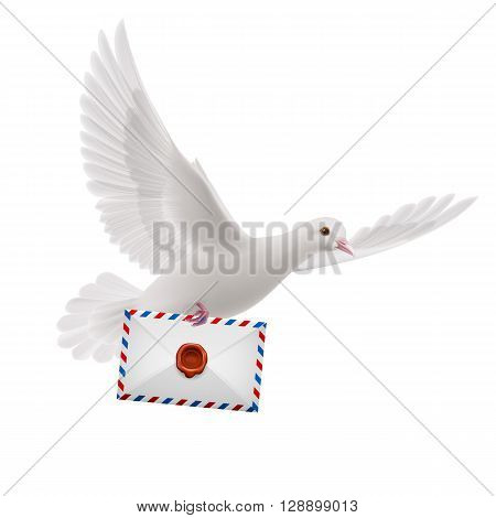 Dove fly with male in beak on white background