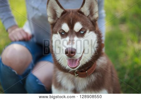Young Woman Sitting In Park With Brown Husky Puppy