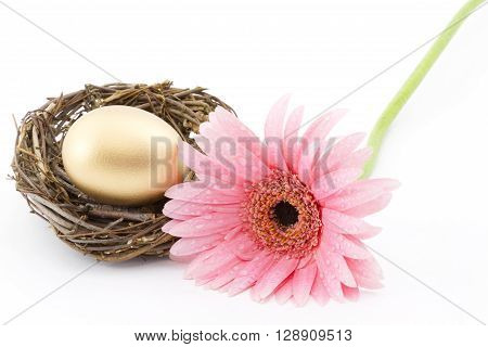 Gold nest egg placed with fresh pink daisy reflects woman's involvement in financial success. Copy space on horizontal image.