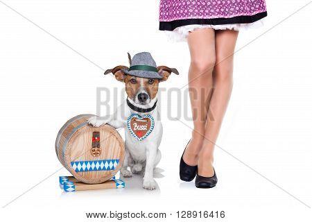 Beer Drunk  Dog