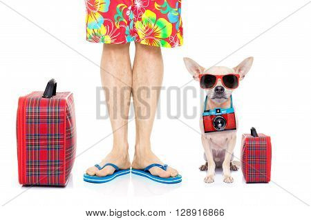 Dog Summer Vacation