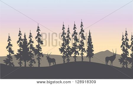 Silhouette of spruce and antelope in the hills