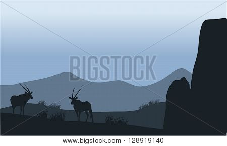Antelope in the hills silhouette  with rock