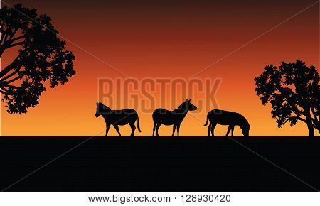 Zebra silhouette in fields at the afternoon