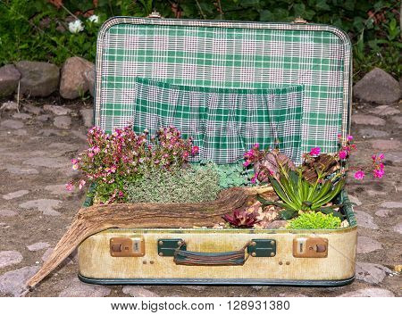 Decorative Planted Succulents In A Suitcase.
