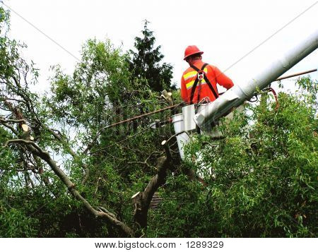 Tree Limb Trimmer