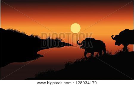 Bison silhouette in riverbank at the afternoon