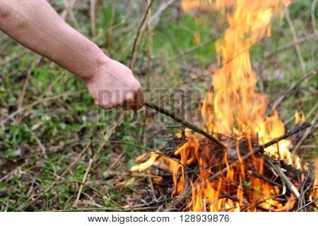 Fire in the forest. The image of the hand of the man who stirs the embers to a burning flame.