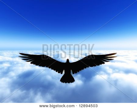 Glorious eagle above the sky