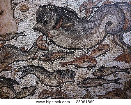 Mosaic In Arian Baptistry, Ravenna, Italy