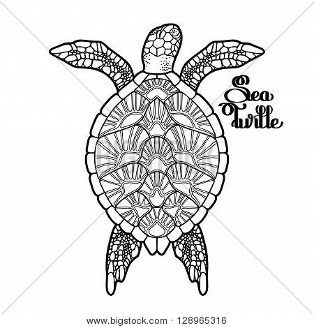 Graphic Hawksbill sea turtle drawn in line art style. Ocean vector creature isolated on white background. Top view. Coloring book page design
