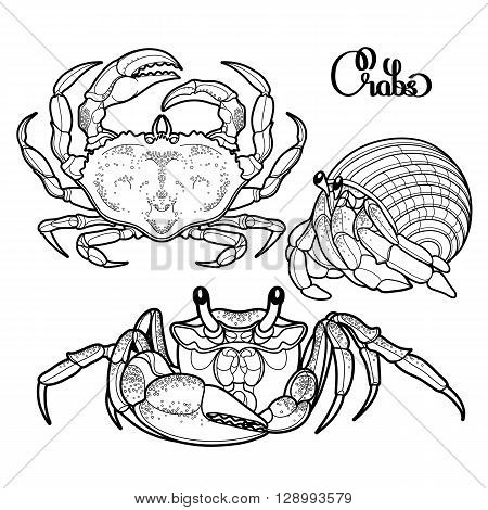 Graphic vector crab collection drawn in line art style. Sea and ocean creature isolated on white background. Top view. Seafood element. Coloring book page design