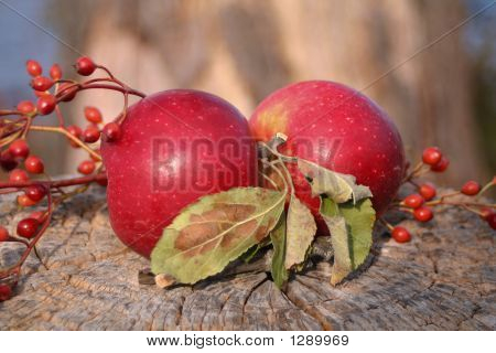 Twin Apples Arrangement