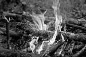 The fire which ignited in the forest. Black and white image of fire in nature. Kindled a fire using dry twigs sticks and firewood. poster
