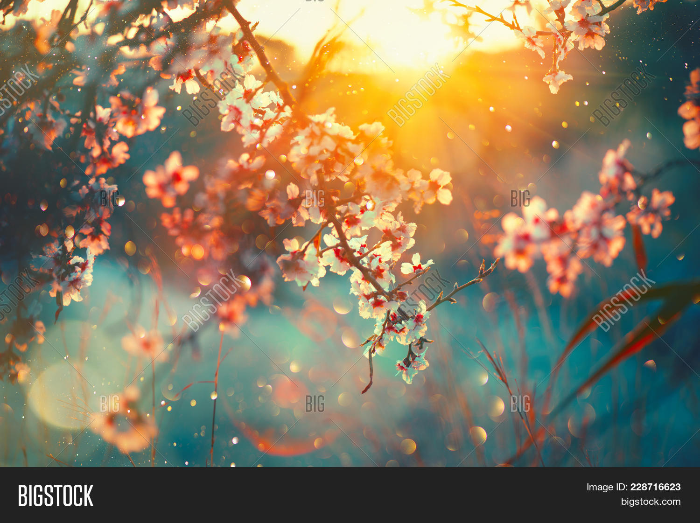 Spring Blossom Image Photo Free Trial Bigstock