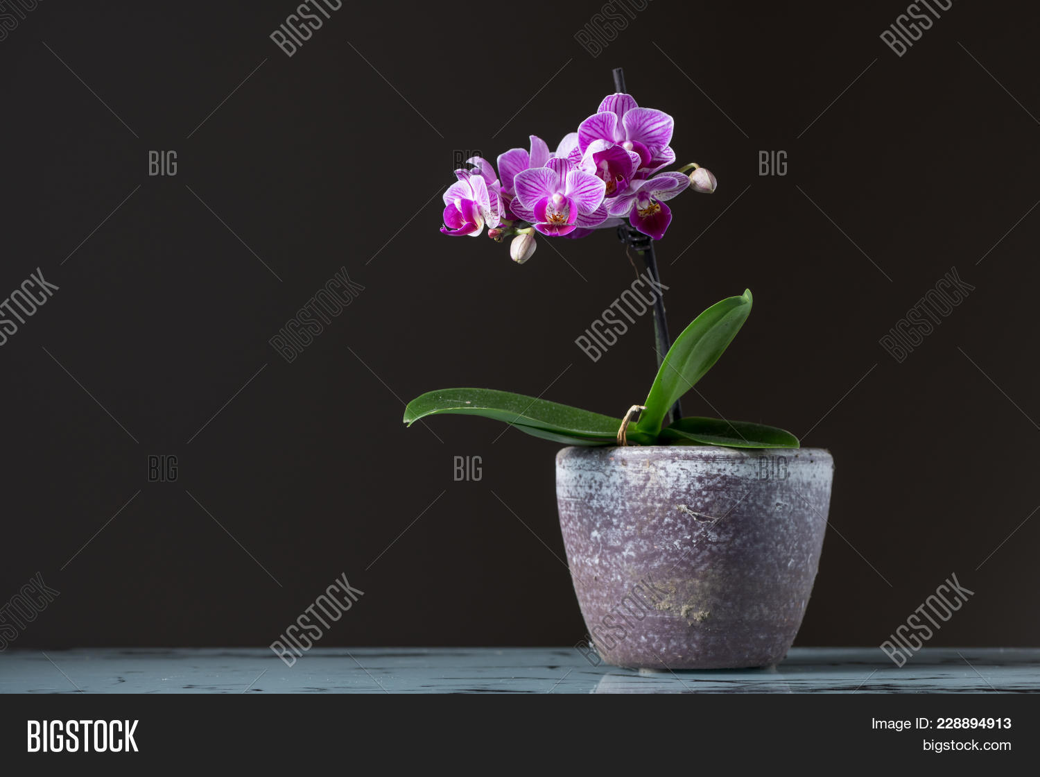 Small Pink Orchid Image Photo Free Trial Bigstock