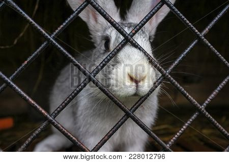 White Funny Rabbit Close-up In A Cage At Animal Farm