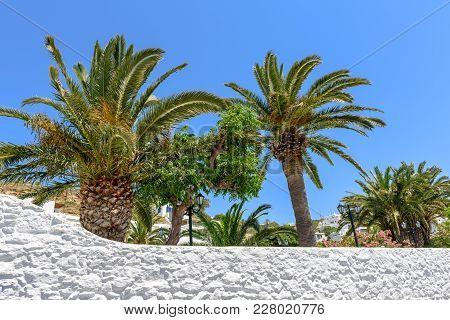 Palm Trees With Blue Sky. Mykonos Island, Greece