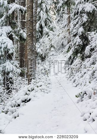 Snow Covered Burley Mountain  Trail,winter 2018, Washington, Usa