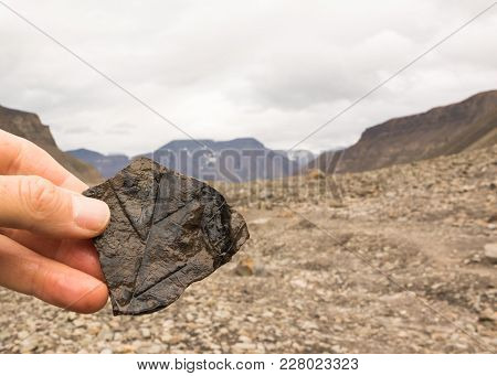 Fossil Leaf On A Rock On Spitsbergen On Svalbard Island Norway. Human Hand Holding Rock. Longyear Va
