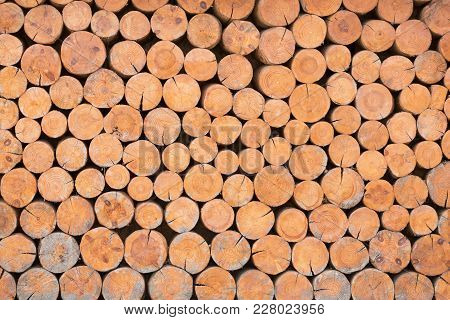 Texture Of The Ends Of The Logs Lying On One Another, Design, Stylized Wall