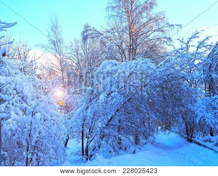 The Tree Branches And Trees Covered With Snow