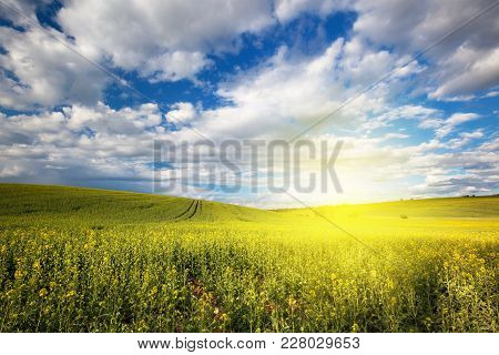 Beautiful Nature Sunny Spring Field Panoramic Landscape