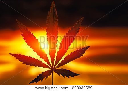 Hemp Leaf Sunset In Warm Color. Natural Marijuana, Cannabis, Horizontal Photograph On Blurred Backgr