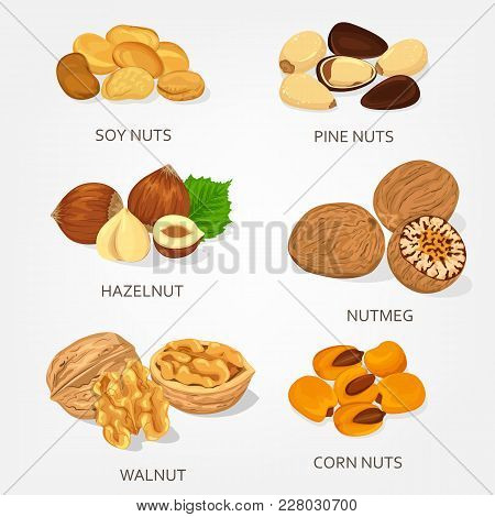 Nut Food Ingredients. Hazelnut And Walnut, Corn And Soy Shell, Pine Opened Nuts. Species Plant Isola