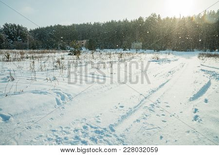 Sunny Day. Snowy Field, Snowfall And Forest
