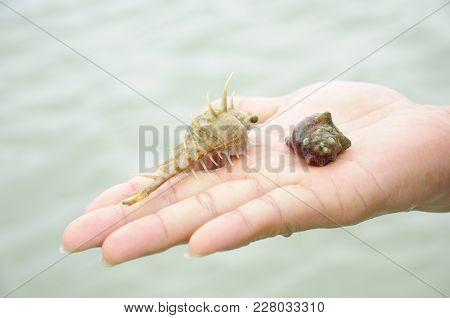 Hermit Crab Biology Wildlife On Human Hand