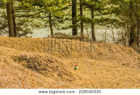 Row Of Burial Mounds In A Wooded Area With Evergreen Trees In Background Bathed In Sunlight