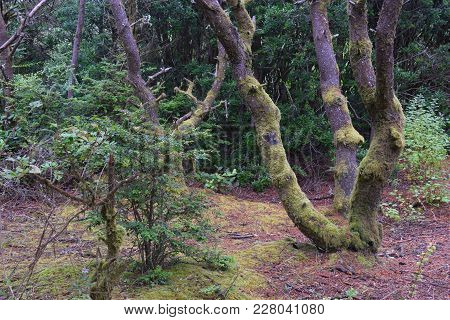 Hiking Trail That Is Winding Through A Mossy Forest.