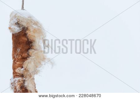 Fruits Of Reeds Isolated On White Background. Winter In The Village