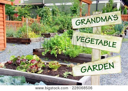 Lush and organic community garden growing vegetables, fruit and herbs in summer. Wooden sign with text: GRANDMA'S VEGETABLE GARDEN