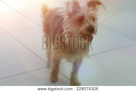 photo cute yorkshire terrier.