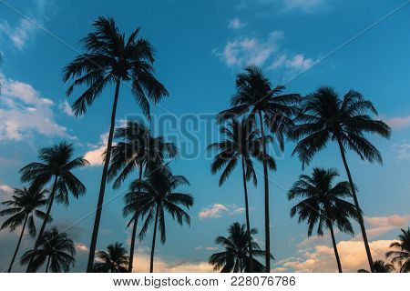 Palm trees silhouetted against a blue sky.