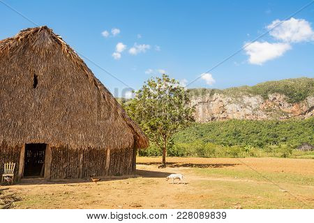 Dryer For Tobacco In The Valley Of Vinales (cuba)
