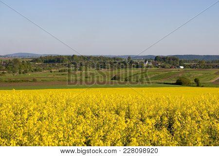 Blooms field yellow image photo free trial bigstock blooms field of yellow flowers oilseed crops mightylinksfo
