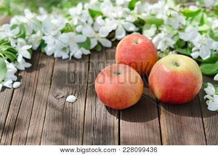 Three Ripe Apples And Flowers Of Apple. Brown Wooden Background.