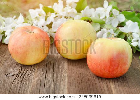 Three Ripe Apples And Flowers Of Apple. Brown Wooden Background.  Close Up
