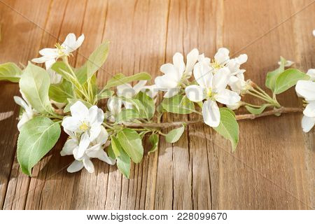 Sprig Of Apple Flowers On A Wooden Background