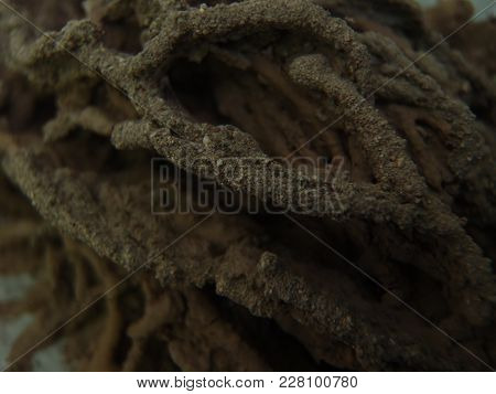 Close Up Of A Brown Wasp Nest
